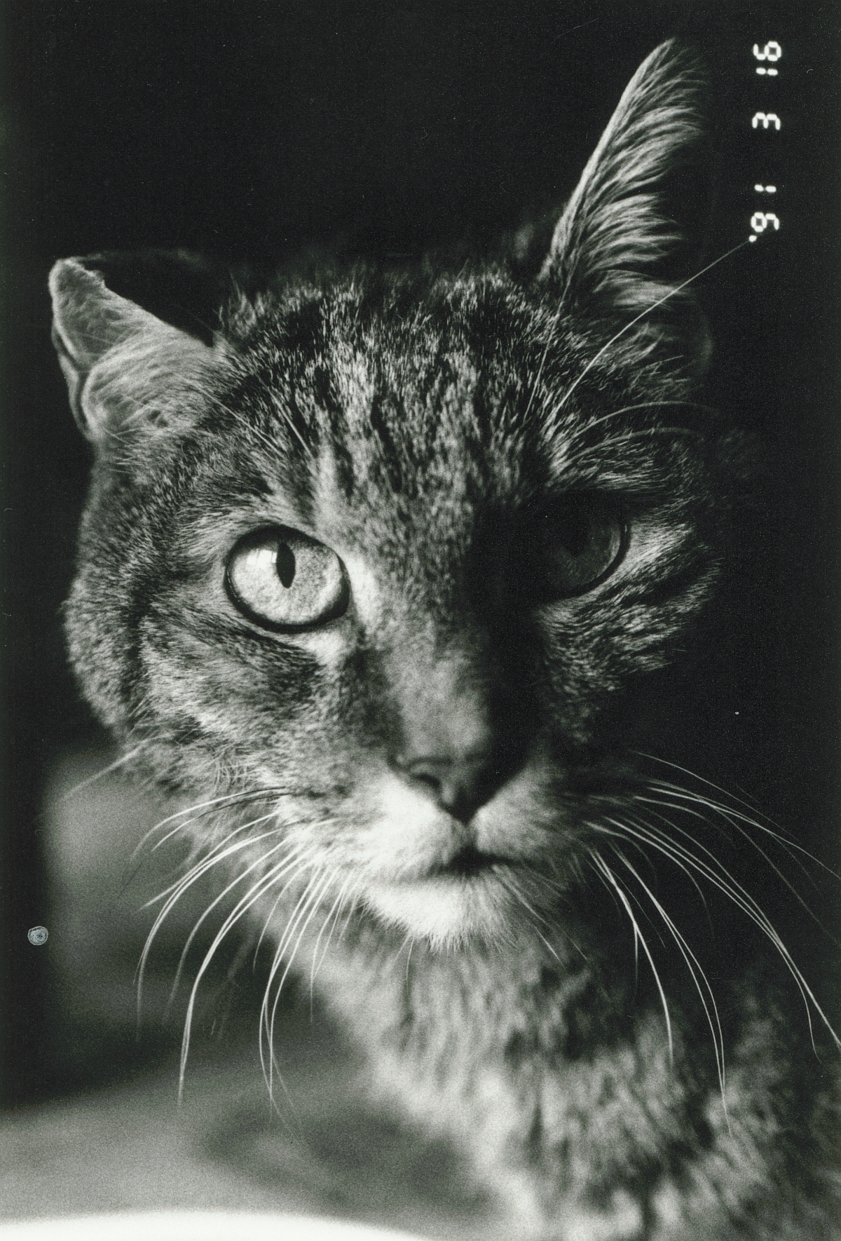 LEO était l'un des chats de Renate, ma compagne. Il est décédé il y a déjà bien longtemps, à un bel âge, après avoir eu une belle vie de chat, cliquer pour une vue agrandie