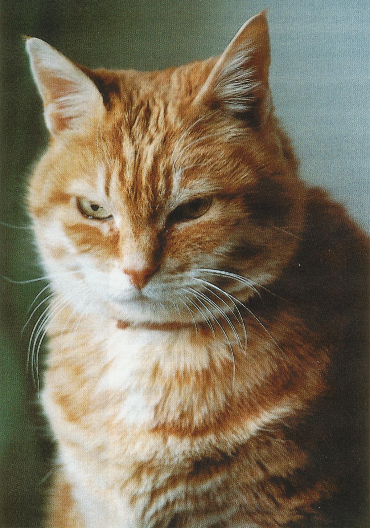 Mischi a été l'une des chattes de ma compagne, Renate. Mischi était égyptienne, Renate l'avait sauvée de la rue au Caire, lors de l'un de ses nombreux séjours en Égypte, cliquer pour une vue agrandie