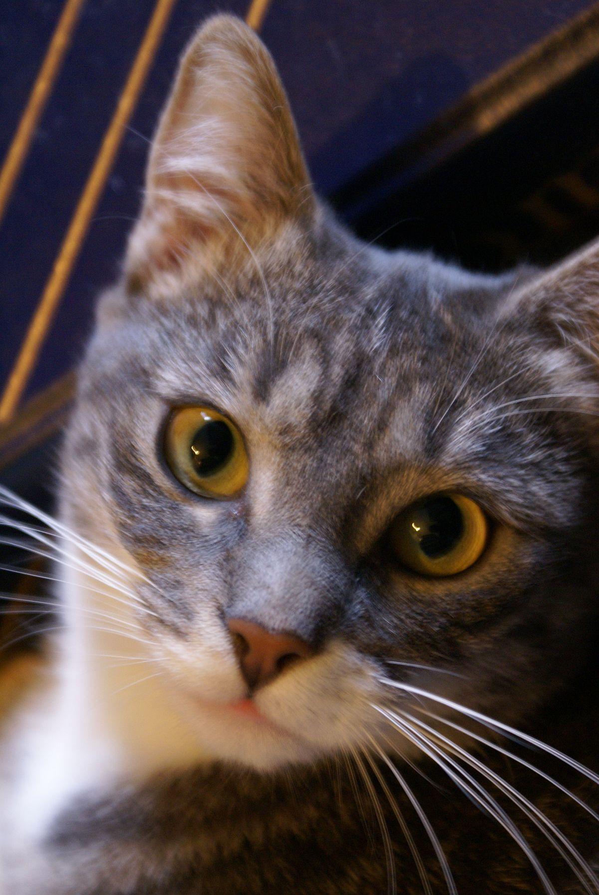 Ma chatte Zephi, vers 2007, cliquer pour une vue agrandie